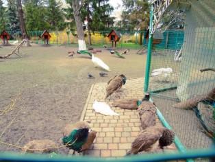 Отдых в Миргороде.  Зоопарк