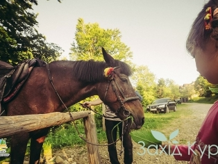 Прогулки на лошадях