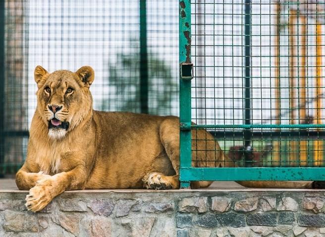 Зоопарк Лимпопо, Меденичи