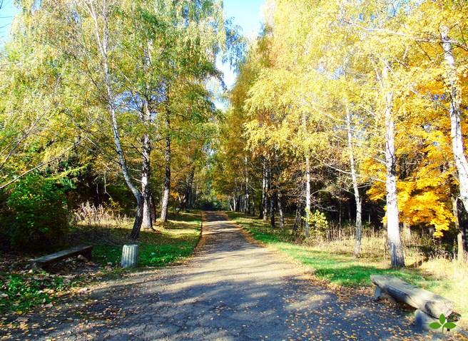 Курортный парк Трускавца — царство зелени, воды и чистого воздуха