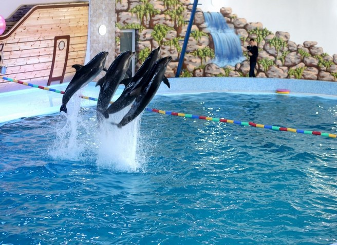 Дельфинарий Трускавец
